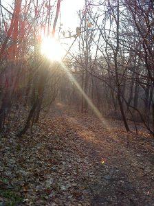 Sunce je slalo neke signale, ali se šuma nije budila...